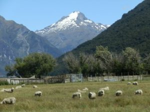 New Zealand Overseas Adventure Travel